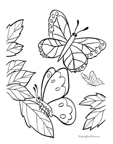 real butterflies coloring pages - photo#17